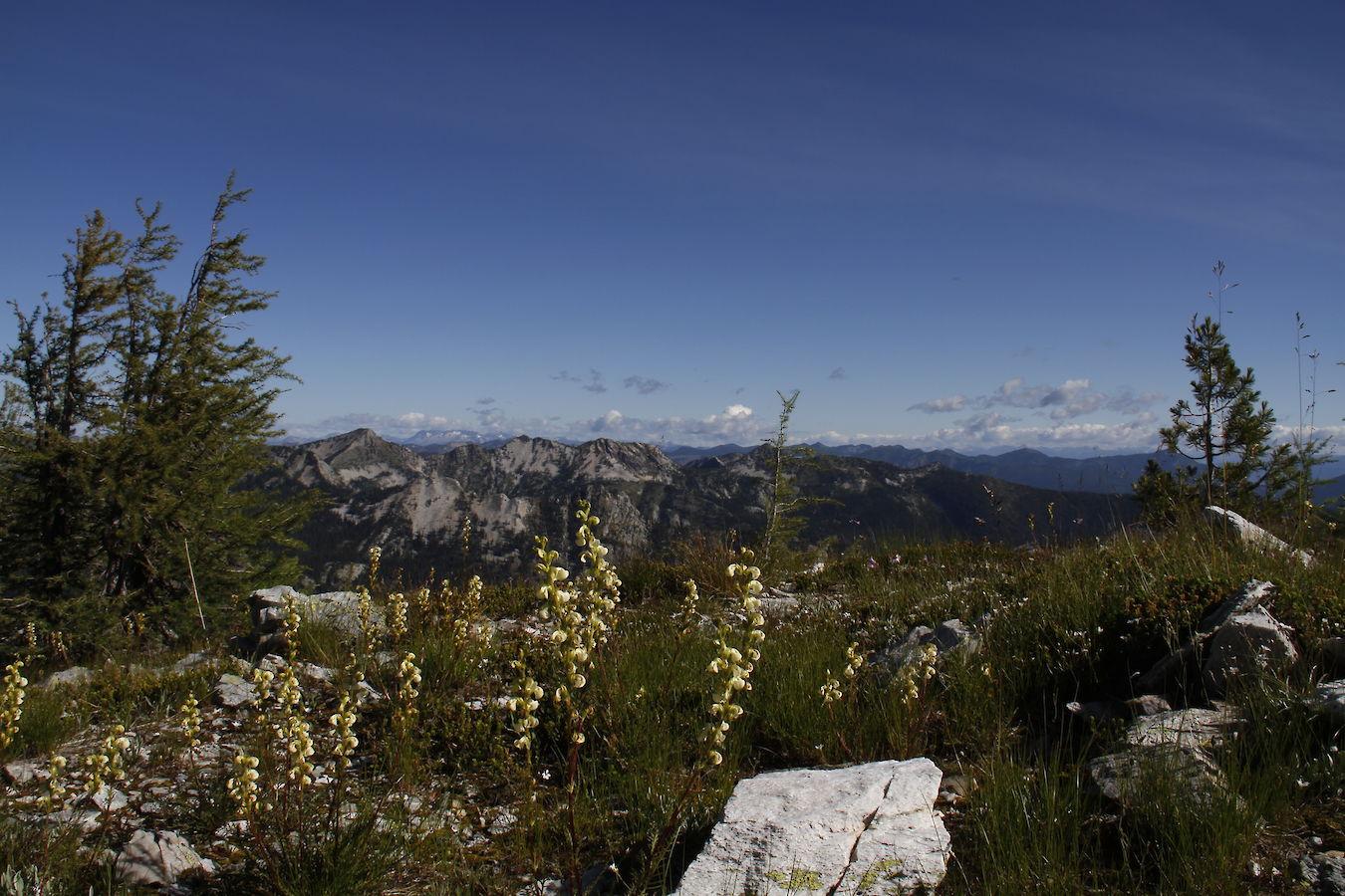 Schwarzwald In Kanada