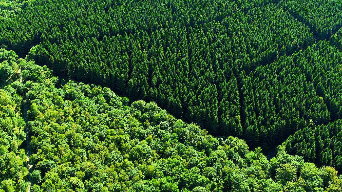Sprache Der Bäume